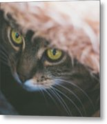 Tabby Cat Looking From Beneath A Blanket  Metal Print