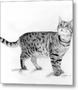 Tabby Cat Looking Up Metal Print