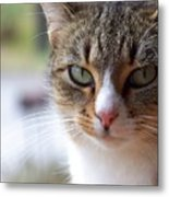 Tabby Cat Portrait Metal Print