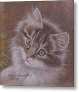 Tabby Kitten Metal Print by Dorothy Coatsworth