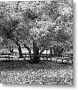 Tables And Tree Metal Print