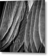 Tail Feathers Abstract Metal Print