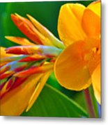 Tail Of Color Metal Print