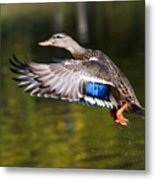 Take-off - Santa Cruz, California Metal Print
