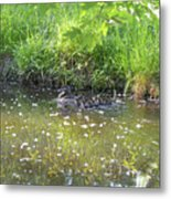 Taking A Stroll With Mom Troughs Floral Reflections Metal Print