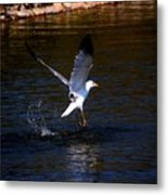 Taking Flight Metal Print by Amanda Struz