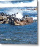 taking flight Capetown Metal Print