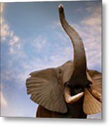 Talking Elephant Metal Print