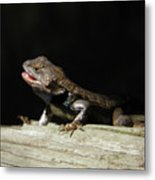 Talking Lizard Metal Print