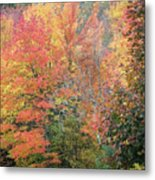 Tall And Wide Metal Print