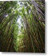 Tall Bamboo Metal Print