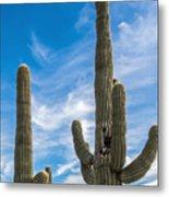 Tall Cacti Metal Print