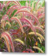 Tall, Colorful, Whispy Grasses In The Sumer Breeze Metal Print