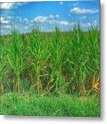 Tall Corn Metal Print