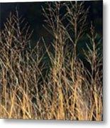 Tall Fall Grasses Metal Print