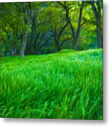 Tall Grass At Twilight Metal Print