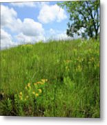 Tall Grass Hillside Metal Print by Scott Kingery