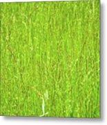 Tall Grassy Meadow Metal Print