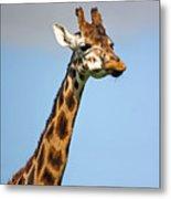 Tall Necked Giraffe Metal Print