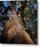 Tall Oak Metal Print