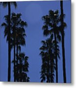 Tall Palm Trees In A Row Metal Print