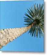 Tall Palm Metal Print