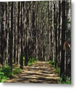 Tall Pine Lined Path Metal Print