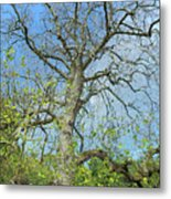 Tall Tree Metal Print