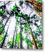 Tall Trees To The Sky Metal Print