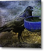 Taming Of The Crow Metal Print