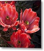 Tangerine Cactus Flower Metal Print