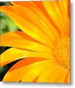 Tangerine Side Bloom Metal Print