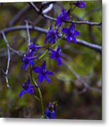 Tangled Metal Print by Barbara Schultheis