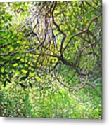 Tangled Embrace Metal Print
