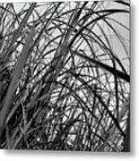 Tangled Grass Metal Print