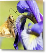 Tan_moth Metal Print