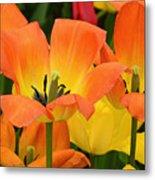 Tantalizing Tulips Metal Print