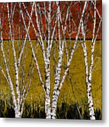 Tante Betulle Metal Print by Guido Borelli