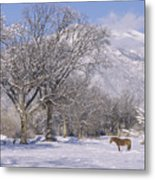Taos January 2008 Metal Print
