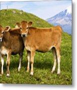 Taranaki, Dairy Cows Metal Print by Himani - Printscapes