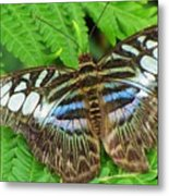 Tattered Beauty Metal Print