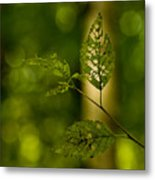 Tattered Leaves Metal Print