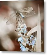 Tattered Wings B1 Metal Print