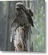 Tawny Frogmouth With It's Eyes Closed And Wing Extended Metal Print