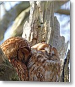 Tawny Owls In Love Metal Print