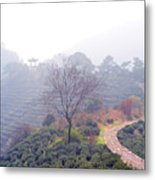 Tea Field Metal Print