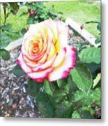 Tea Rose For A Lady Metal Print