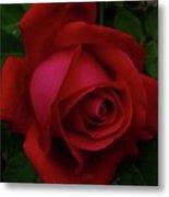 Teardrops Of A Rose Metal Print