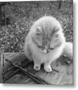 Ted In Black And White Metal Print