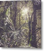 Temperate Rainforest Canopy Metal Print